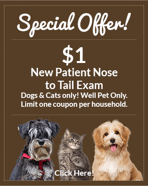 Special Offer! $1 New Patient Nose to Tail Exam. Dogs and Cats only. Well pet only. Limit one coupon per household. Click here!